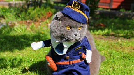 Look out, it's the fuzz! Cat submits purr-fect resume to RCMP