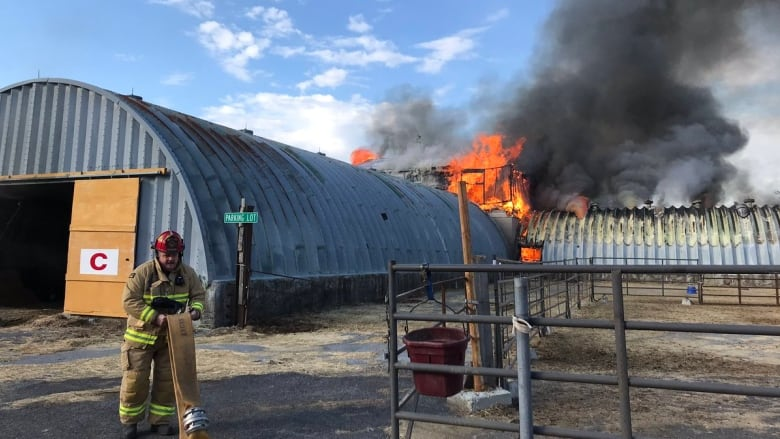 Horses saved from fire at farm