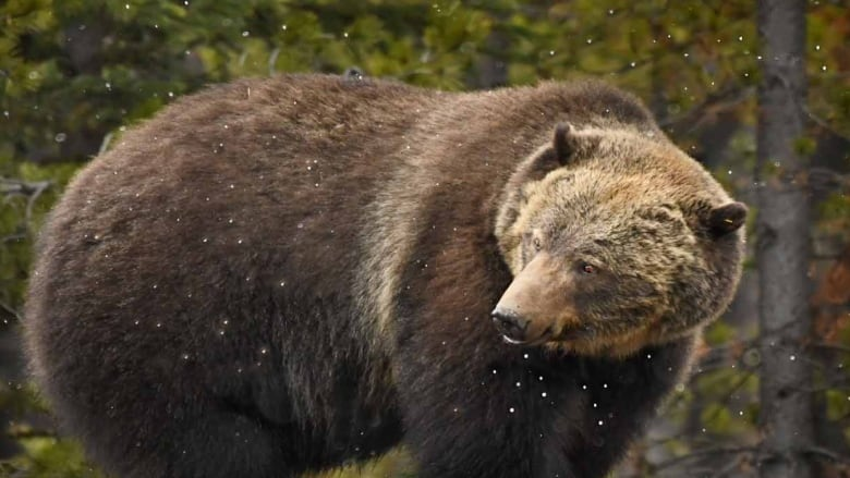 Grizzly, wild horses, baby owlets and more: Photos catch wildlife shaking off winter doldrums