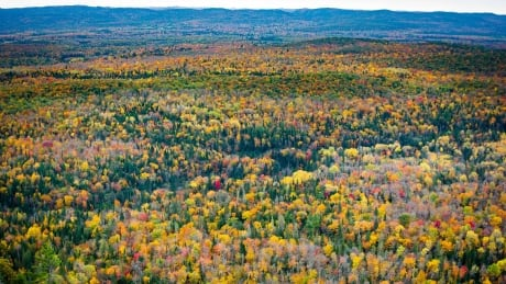 Ontario cancels program that aimed to plant 50 million trees