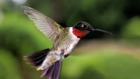birds of spring on PEI
