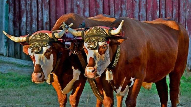 New directors hope to bring energy to Shelburne County Exhibition