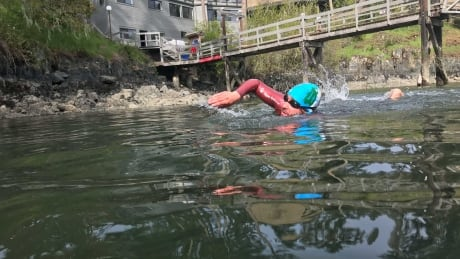 Swirling currents, frigid water and sea lions: Vancouver Island students attempt open-water swim