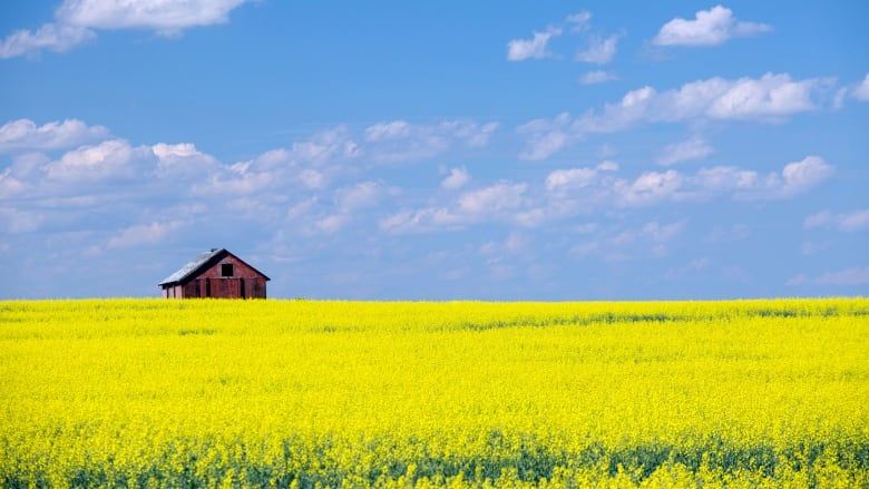 Canada pushes China at WTO on canola as Beijing bristles over Trudeau criticism