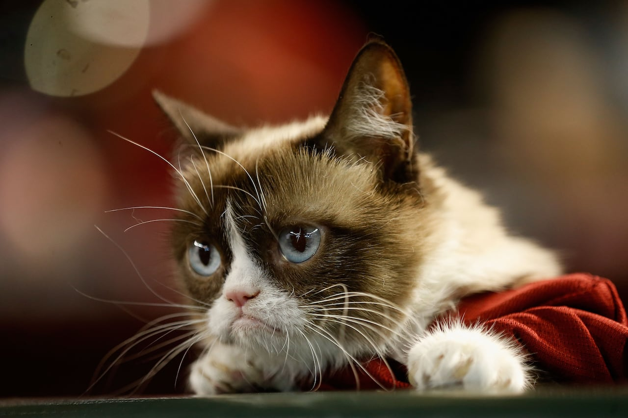 Grumpy Cat showed up in Metro Vancouver in 2014 to film a movie