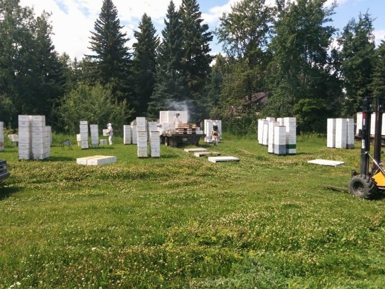 Honeybee heist stings beekeeping family farm | CBC News