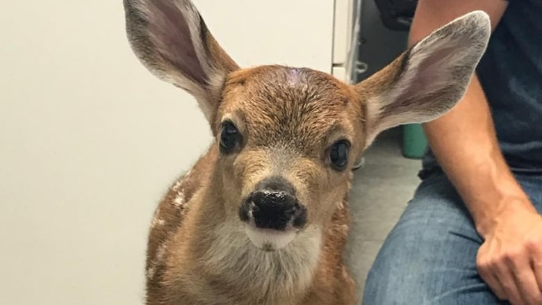 Call us before bringing in orphaned animals, wildlife centre says