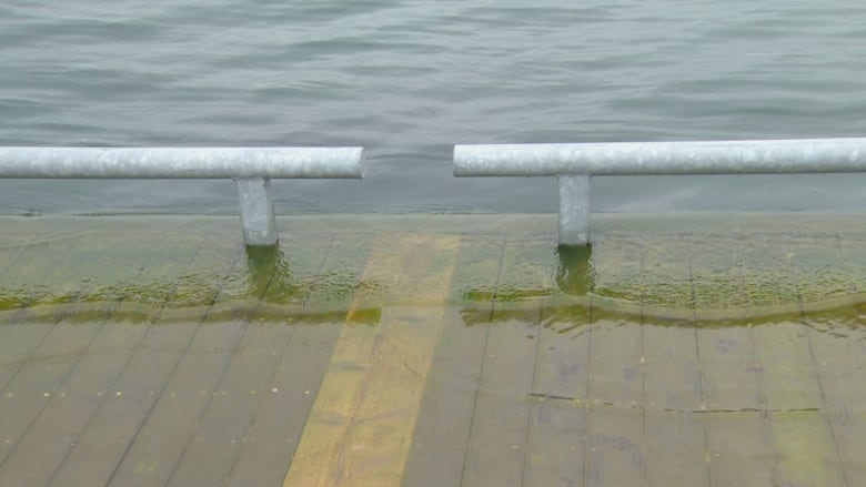 Flooding on Toronto Islands means dragon boat race festival in limbo