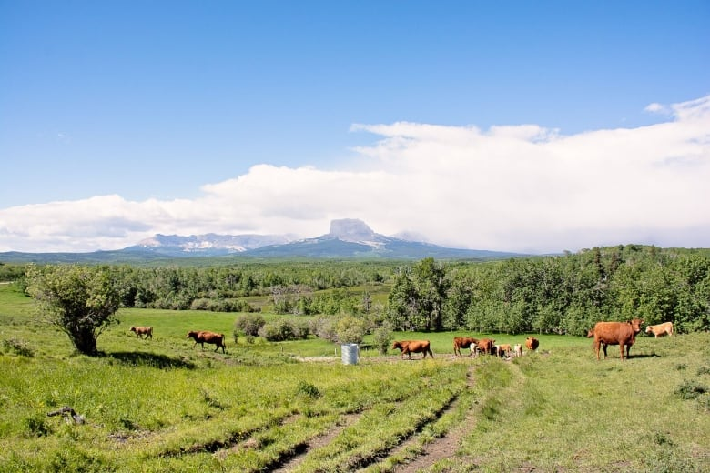 A family legacy: Third-generation Alberta ranchland protected from development
