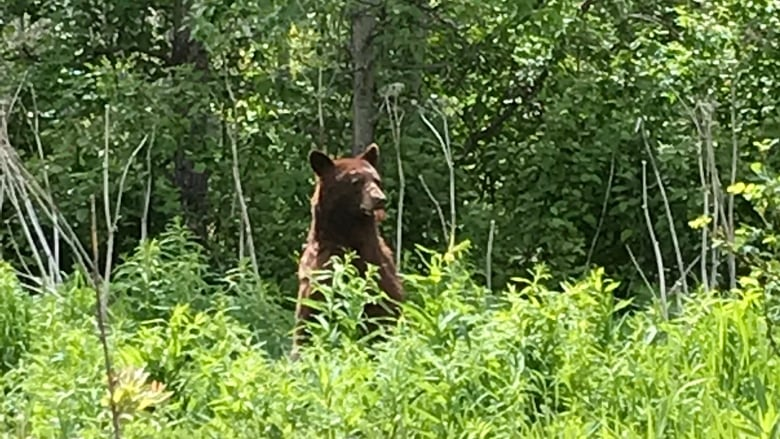 Remote B.C. reserve at leading edge of saving bears with animal-resistant bins