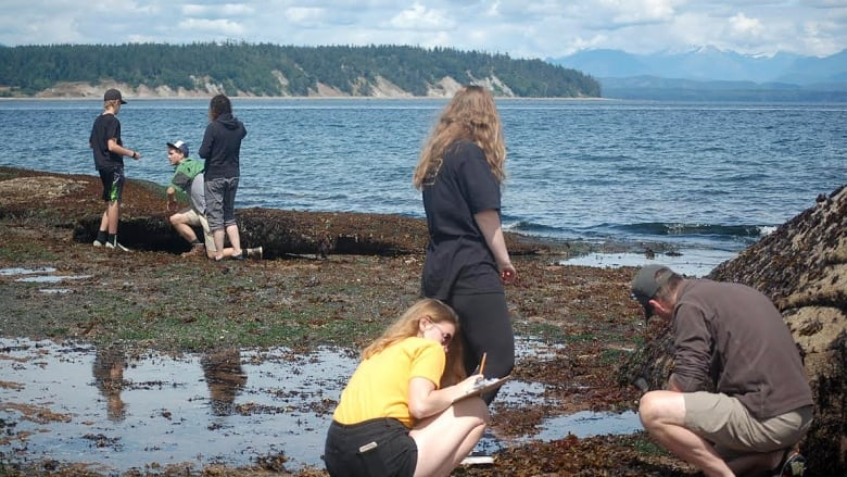 Sea star wasting disease: 'The more we study it, the less we understand'