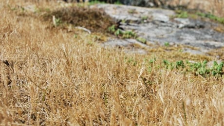 VANCOUVER ISLAND DRY CONDITIONS drought