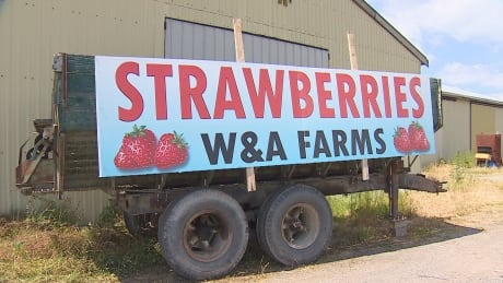 Not berry nice: Richmond strawberry farmer forced to put away sign after 41 years