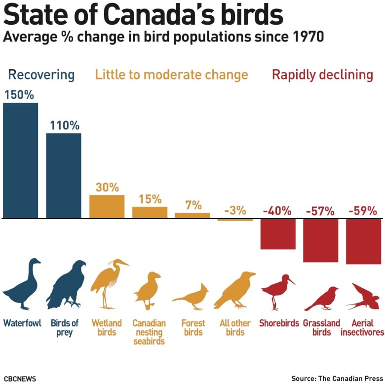 Many bird populations in Canada are falling, but report finds there's hope