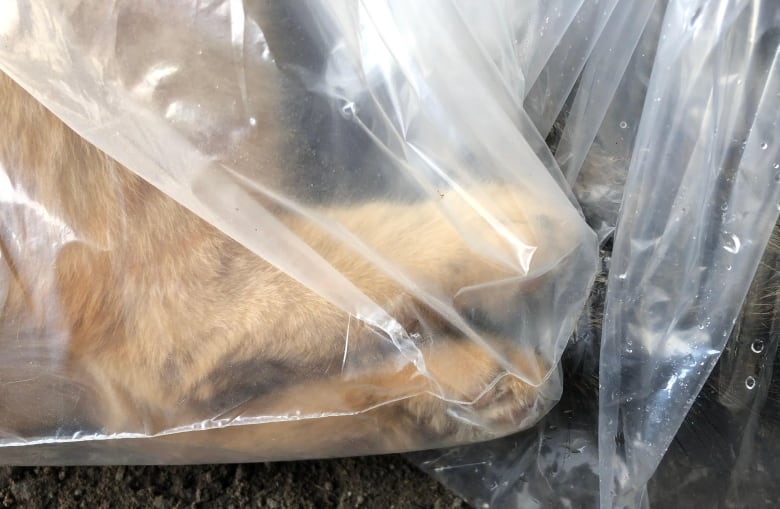 City vows to fix 'horrifying' system for storing dead pets