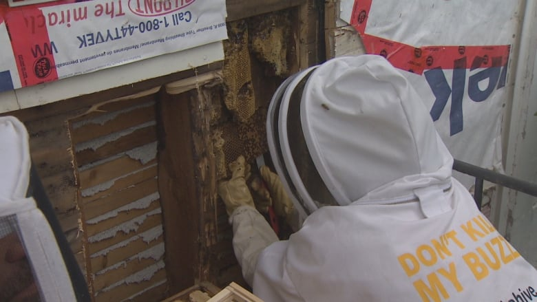 Holy honey: 30,000 bees discovered in Corpus Christi Parish | CBC News