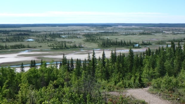 UNESCO says industry, poor governance 'likely' endanger Alberta's Wood Buffalo National Park