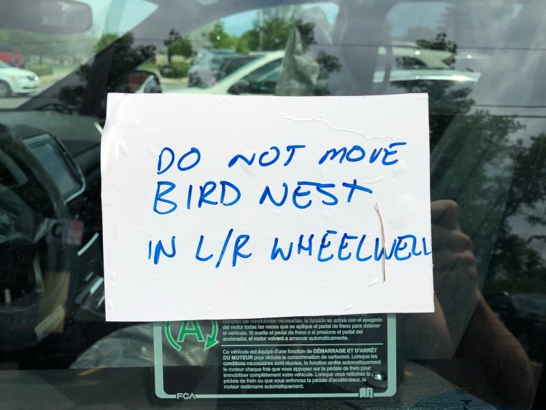 New vehicle stuck on lot after robin builds nest in wheel well | CBC