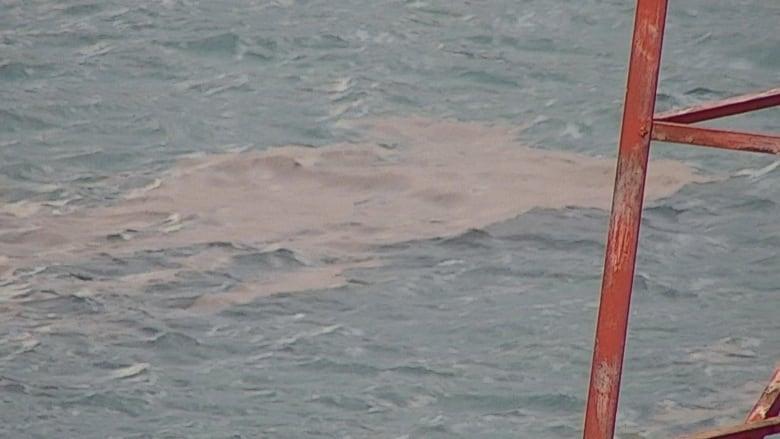 It's not an oil spill, just clumps of dead fish flies
