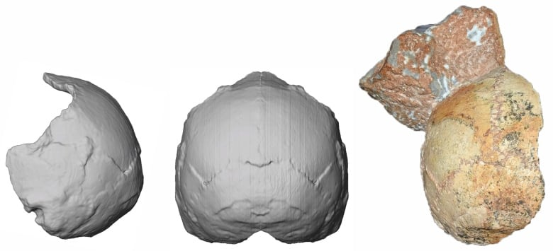 Earliest modern human fossil outside Africa found in Greece, study says