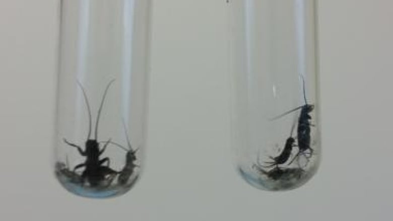 Could crushing live crickets change the way we think about climate change?