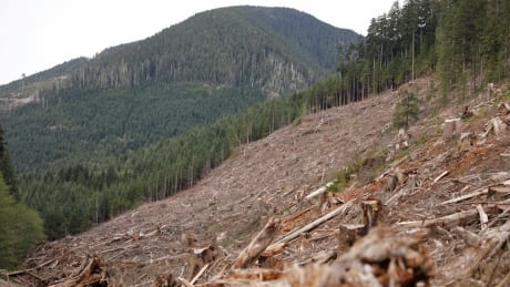 logging clear cut Vancouver Island