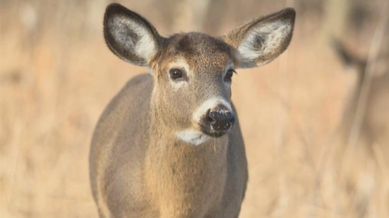Advocates fear meat from latest infected deer herd has entered Canada's food supply