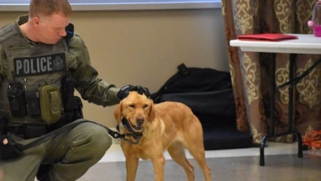 How Zoe the lab sniffed out 2 missing girls in Ontario's Algonquin Park