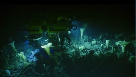 Explorer Seamount