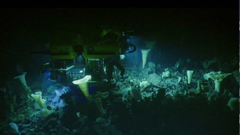Canada's biggest underwater volcano is just off B.C.'s coast — and scientists are finding new species there