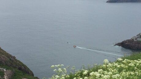 whale rescue 2