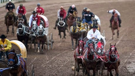 Inaugural chuckwagon finals to be 'safest possible' at Century Downs, says general manager