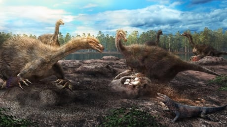 Dinosaur clutches discovered in Mongolia help researchers understand nesting habits