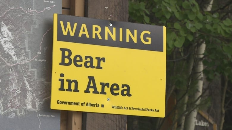 Black bears are ambling into Banff and Canmore in 'pretty unusual' numbers this year