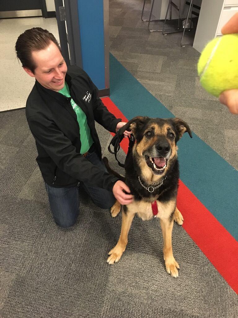 Moe the dog returned to Calgary Humane Society, still