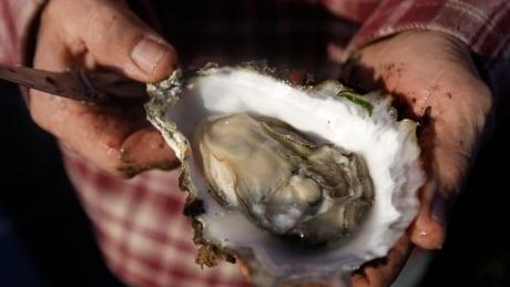 Oyster Farm Dispute