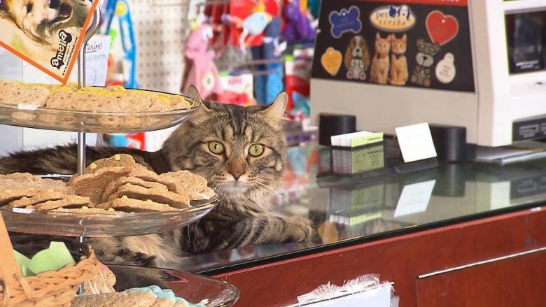 pets online store