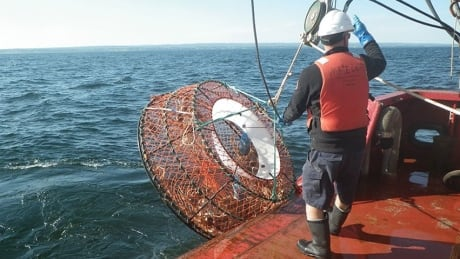 snow crab trap, Gulf of St. Lawrence, ghost gear