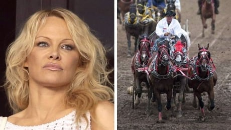 Pamela Anderson chuckwagon races