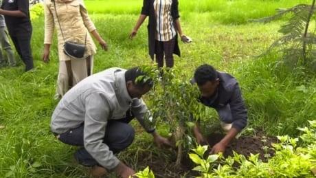 ETHIOPIA-TREES/