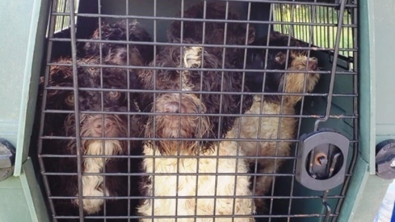 72 dogs seized from alleged Edmonton puppy mill   CBC News