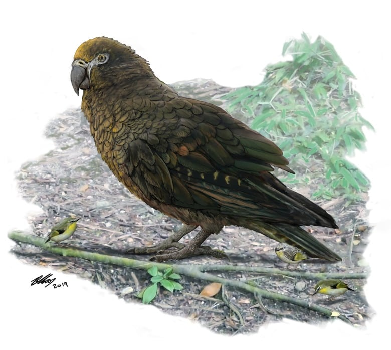 Scientists discover fossils of giant parrot