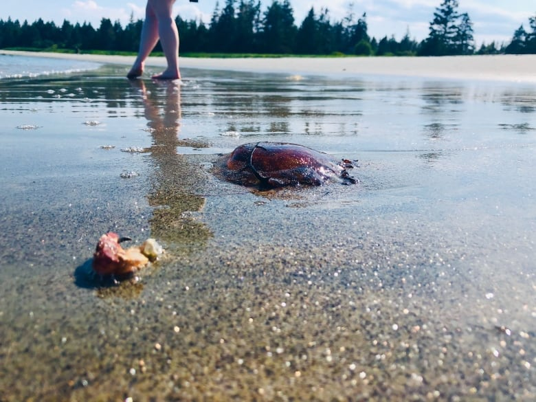 Friends start Facebook page in search for jellyfish-free Cape Breton