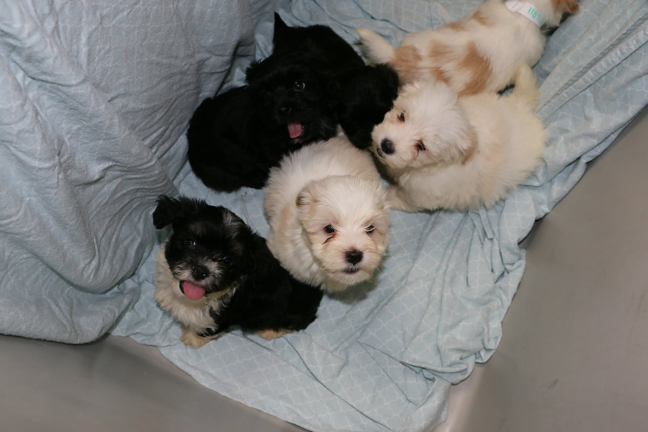 Dogs seized from alleged Edmonton puppy mill on their way to