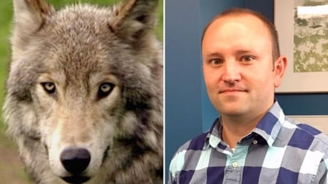 Russ Fee wolf attack