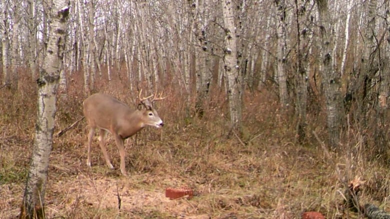 'It's a no-brainer': Hunters call for steps to stop 'Zombie deer disease' epidemic