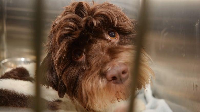 Calgary animal shelter hopeful contagious virus is controlled after dog euthanized