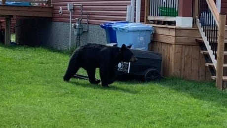 Bear in Abasand