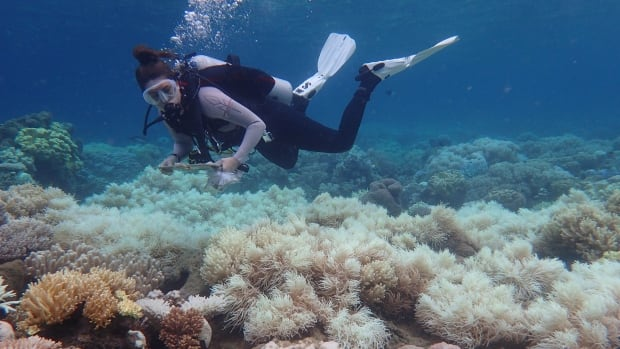 Great Barrier Reef should be listed as 'in danger,' UN says, upsetting Australia