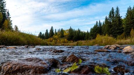 Nathan Puffalt ness creek